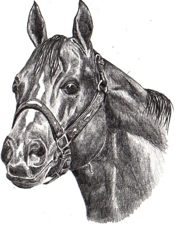 quarterhorse.jpg